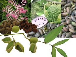 Pestisida Nabati Ramah Lingkungan