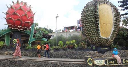 Warso Farm Destiasi Wisata Durian