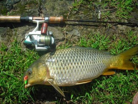 4 Resep Umpan Ikan Mas, Yang terbukti Ampuh !!