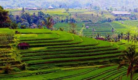 Manfaat Terasering atau sengkedan pada lahan pertanian, yang jarang di ketahui !!