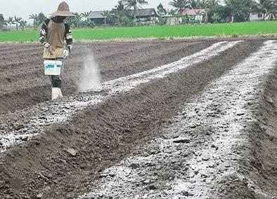 Manfaat Pengapuran Untuk Lahan Pertanian, Apa Saja?