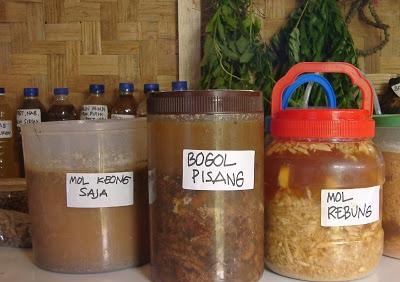 Manfaat MOL (Mikroorganisme Lokal)  dan Resep Cara Membuatnya !!