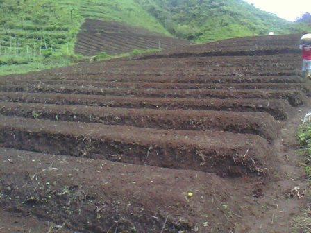 Cara Menghitung Kadar pH dan Bahan Organik di Tanah Dengan Sederhana !!!