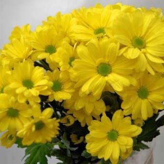 Kapan Waktu Terbaik Memetik Bunga Aster?