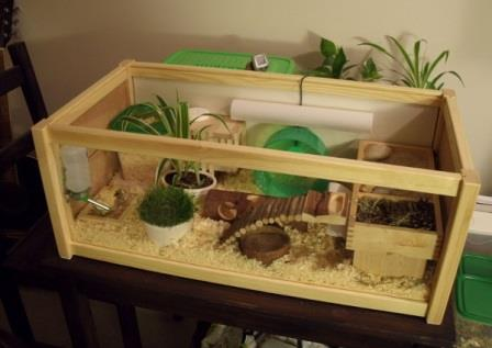 Cara Membuat Kandang Hamster yang menarik !!