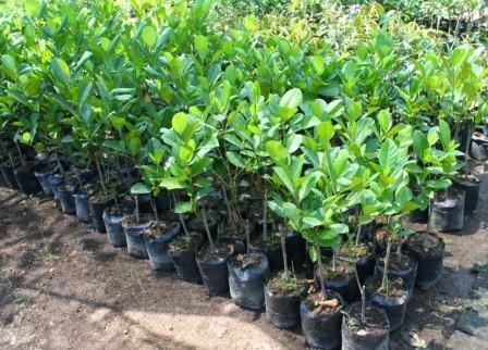 5 Bisnis Anak Muda Pertanian yang Menguntungkan !! (Untuk Kaum Milenial )