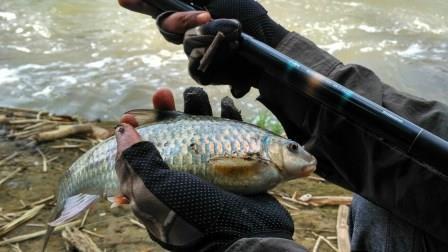 13 Resep Umpan Ikan Nilem yang Terbukti Ampuh !!