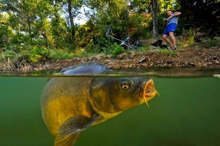 Racikan Umpan Ikan Mas Jitu Super Ampuh Terbaru !!