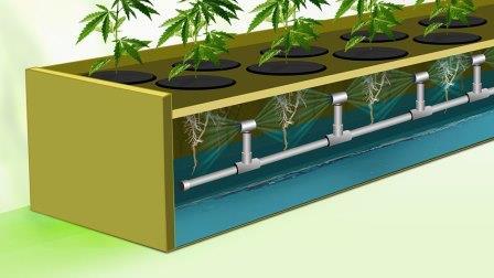 Sistem Aeroponik untuk Budidaya Sayuran !! Cara nya ?