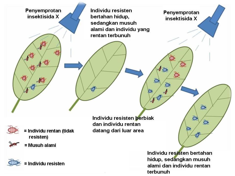 Penyebab Meningkatnya Hama Akibat Penggunaan Pestisida