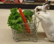 Sistem Integrasi Kelinci dan Sayuran yang Menguntungkan !!