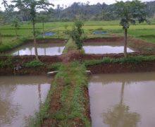 Cara Mempersiapkan Kolam Ikan Nila yang Baik dan Benar !!