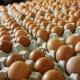 Tips Menyimpan Telur Konsumsi