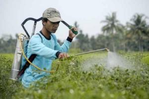 Pengaruh Pestisida Terhadap Kesehatan Manusia, Ini Harus Anda Ketahui !!