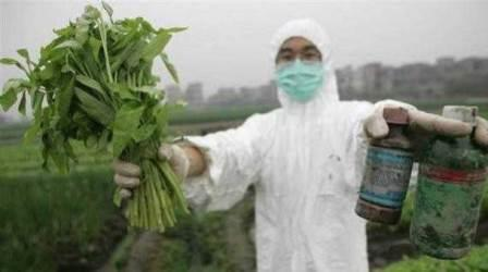 Dampak Negatif Penggunaan Pestisida Kimia yang Berlebihan